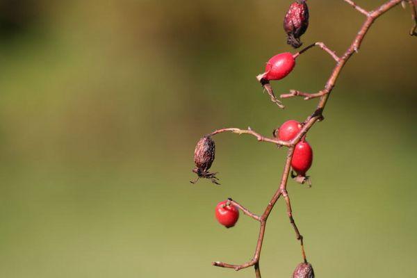 Streifzug durch den Herbst
