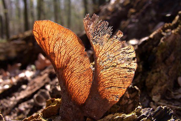 Streifzug durch den Wald