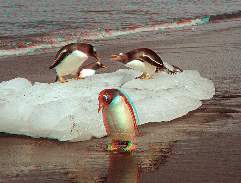 Streitende Pinguine