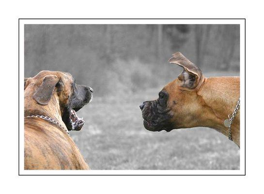Streitgespräch zwischen Mann und Frau