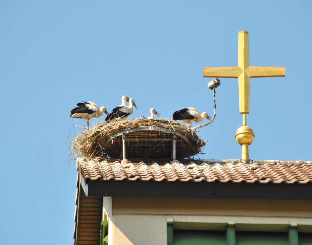 Streng gläubige Storchenfamilie ;-)