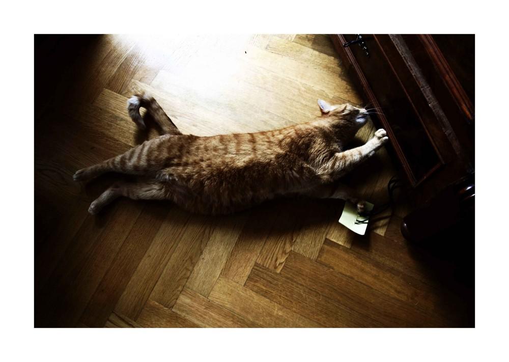 -- stretch  --