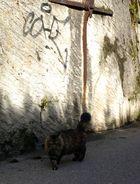 Streunende Katze in Lausanne