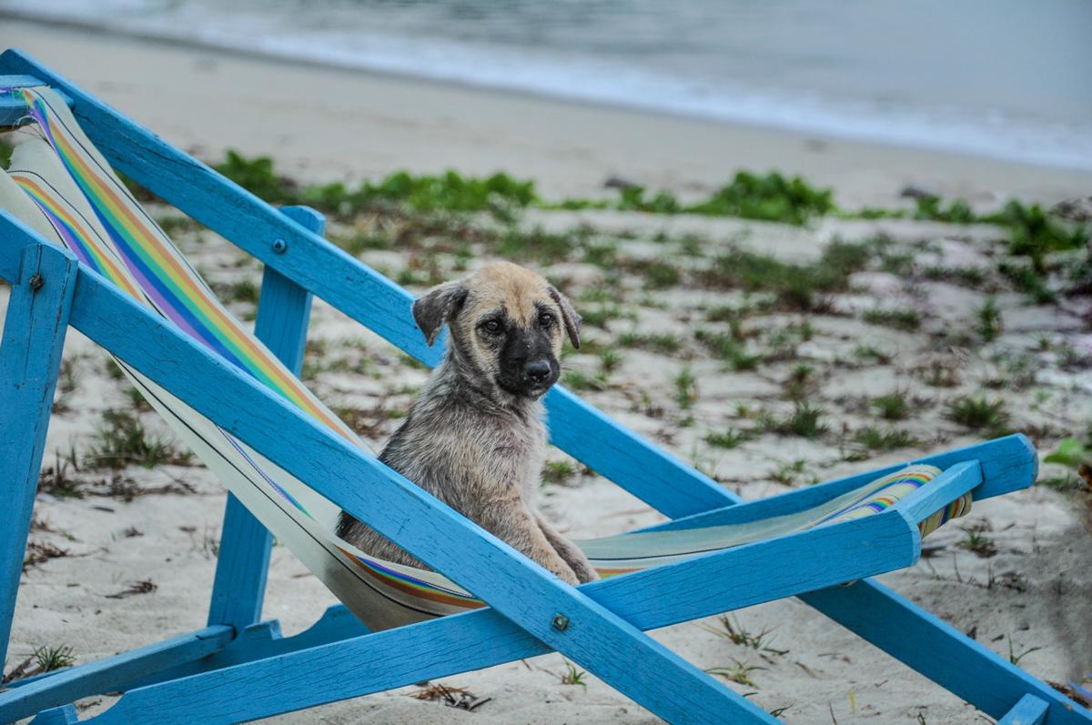 streunender Hund an einem thailändischen Strand