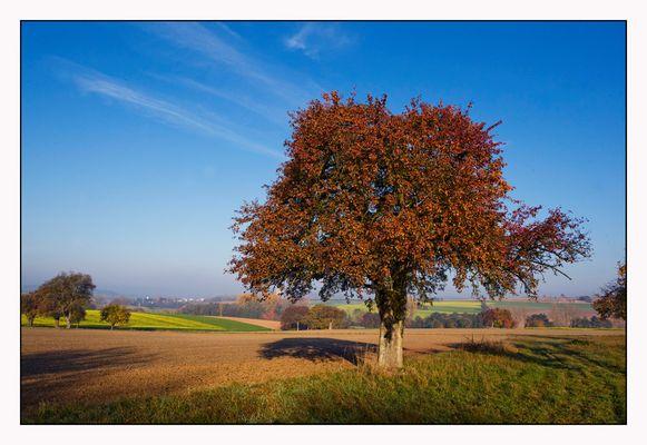 Streuobstbaum