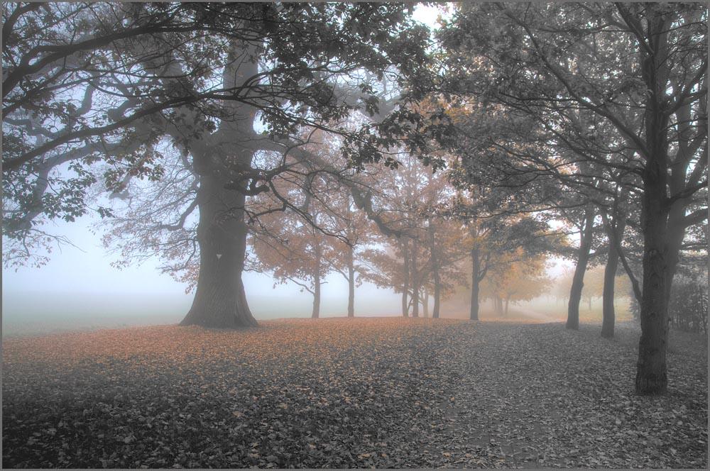 Streuobstwiese im Nebel