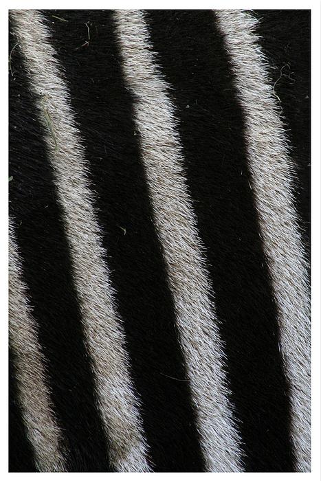 /stripes/
