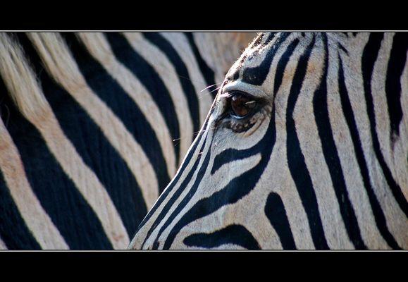 \\\ stripes ///