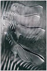 stripes for four