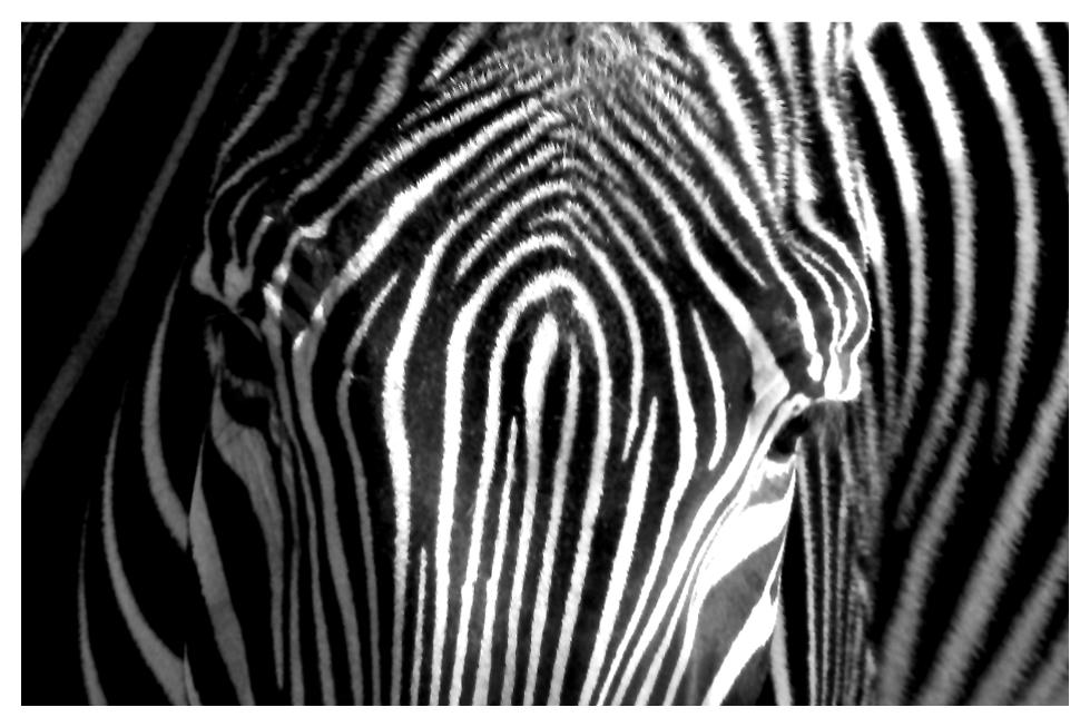 /stripes/ II