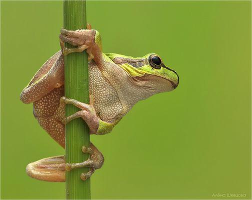 Striptease (dance on a pole)