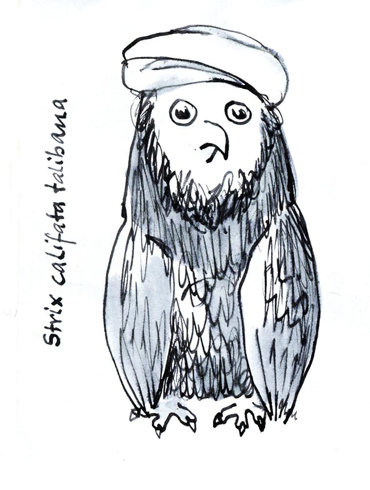 Strix talibana