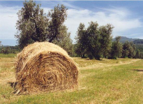 Strohballen im Sommer