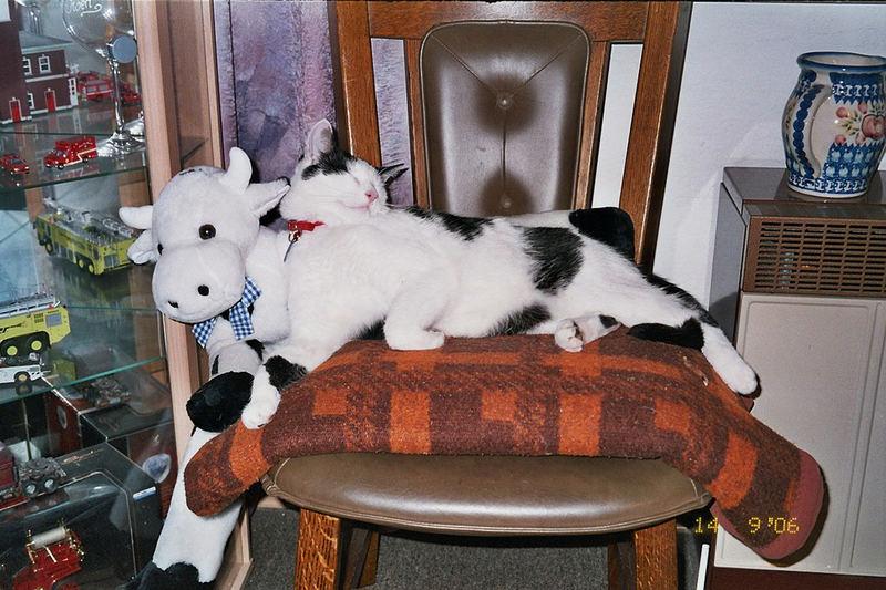 Strolchi und die Kuh