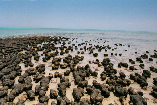 Stromatoliten