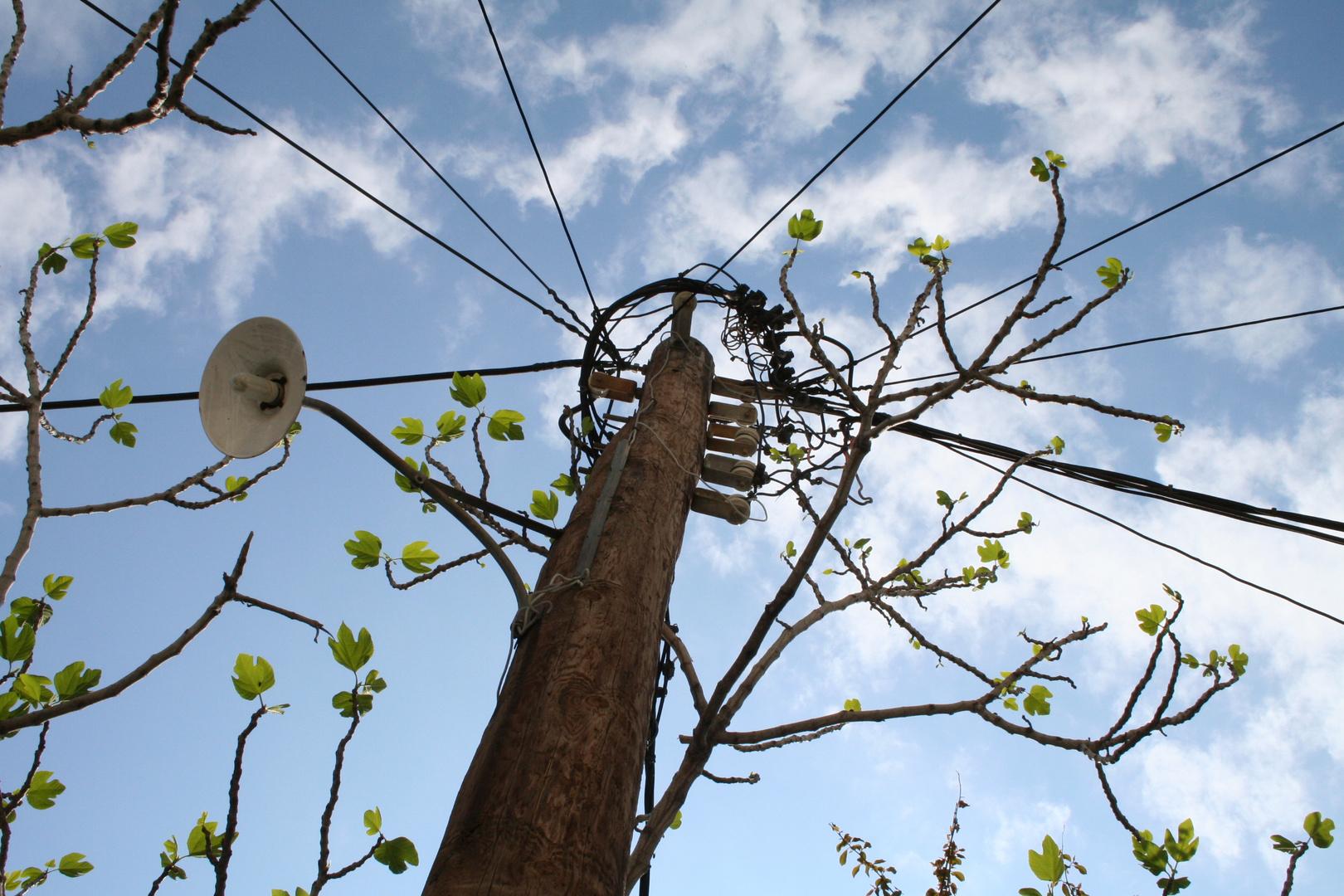 Strombaum