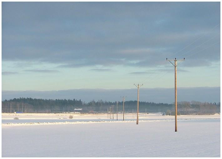 Strommäste in der Schneelandschaft