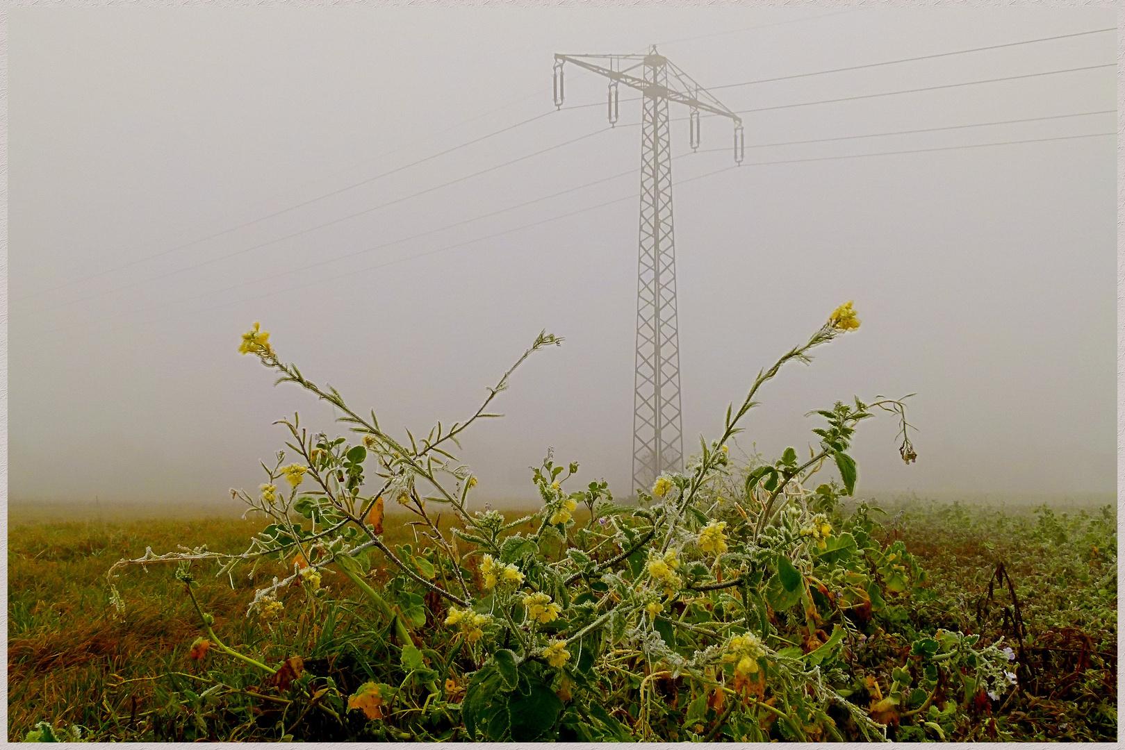 Strommast = als Rankhilfe zu weit entfernt