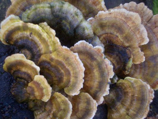 Structure champignon