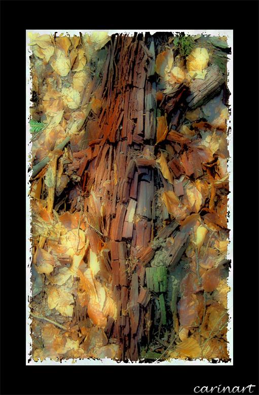 Structure de bois / Holzstruktur