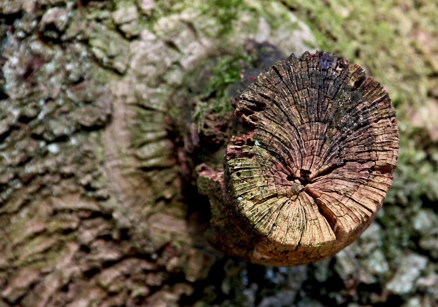 Strukturen der Natur