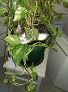 Struppi liebt Pflanzen
