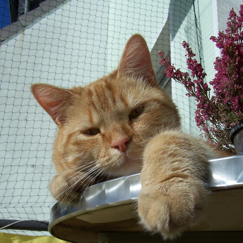 Stubentiger beim Sonnenbad