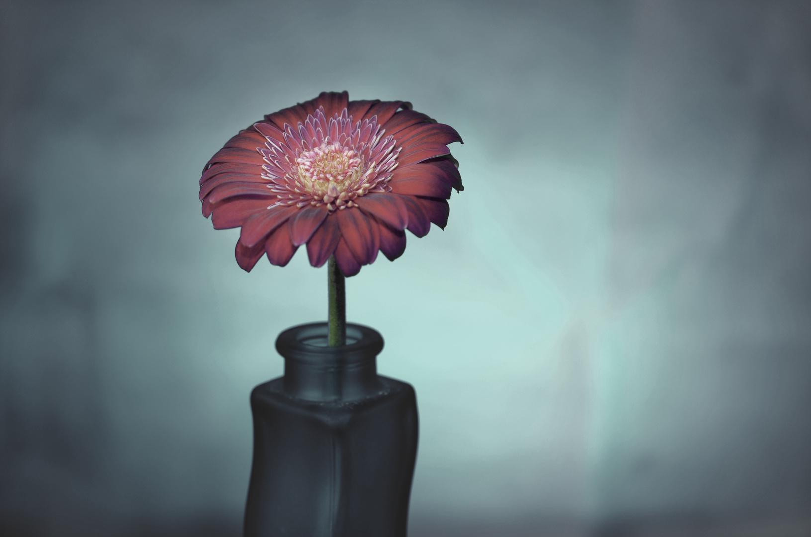 Studio Blume I