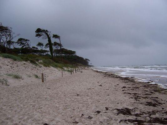 Stürmische Westküste