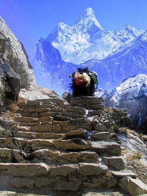 Stufen zur Ama Dablam