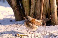 """""""Stunde der Wintervögel""""....."""