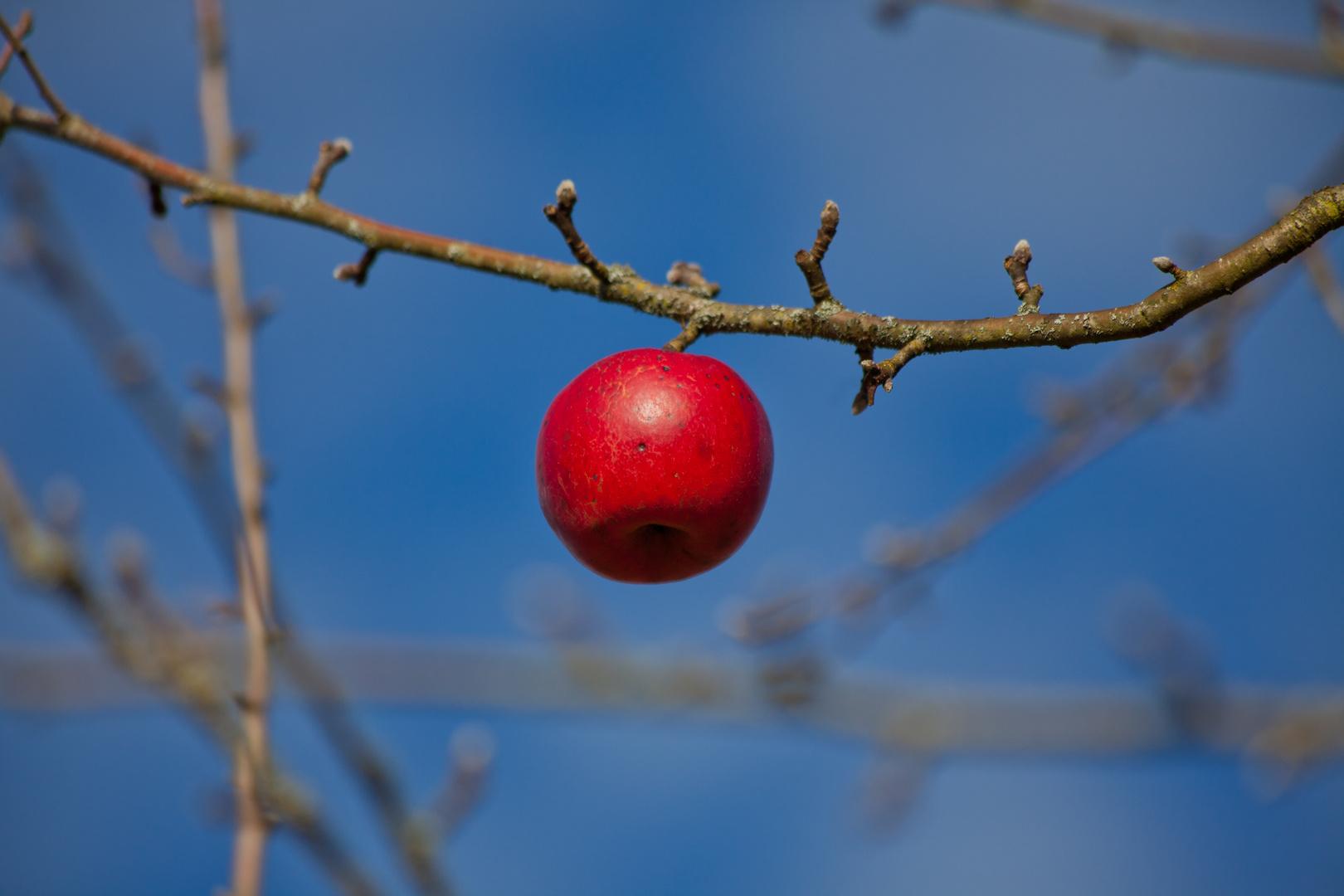 Sturer Apfel