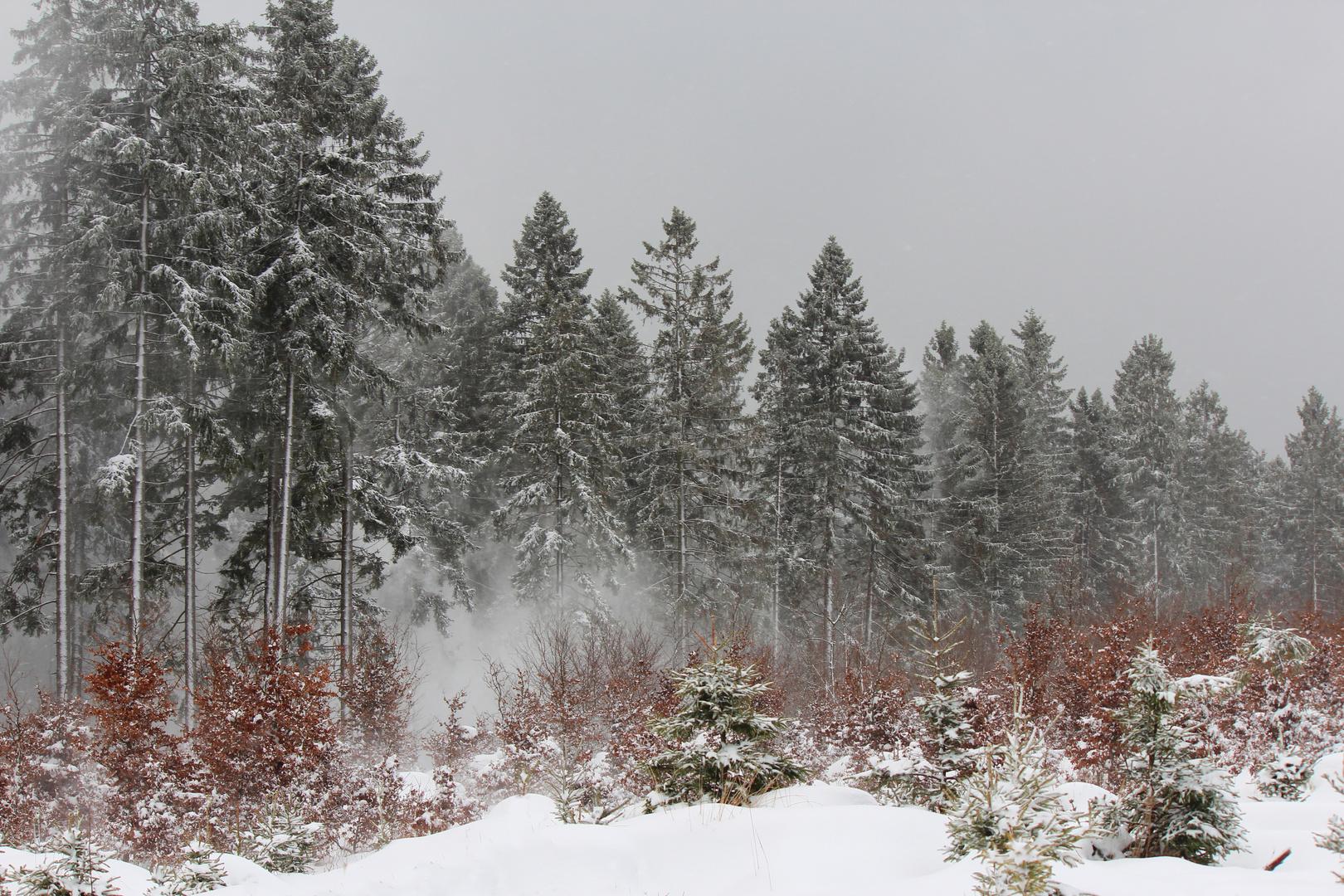 Sturm im Winterwald