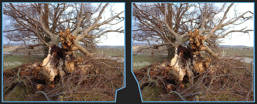 Sturmschaden - Baum weggeklappt