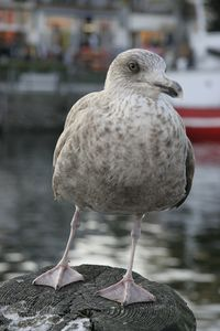 Sturmvogel 68