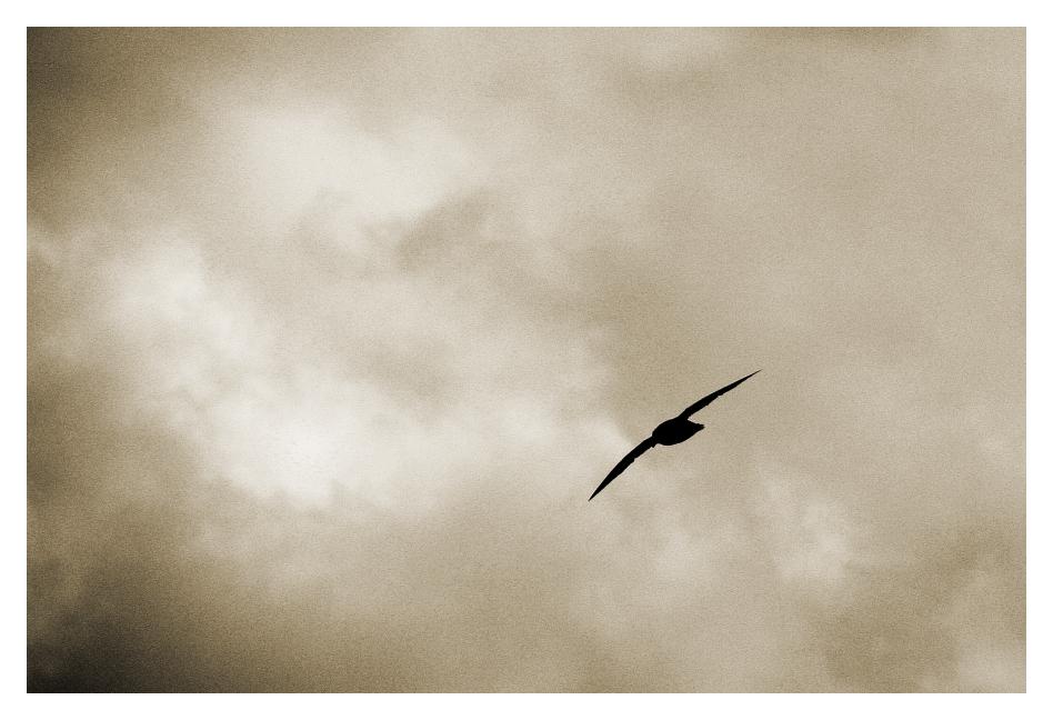 Sturmvogel ...