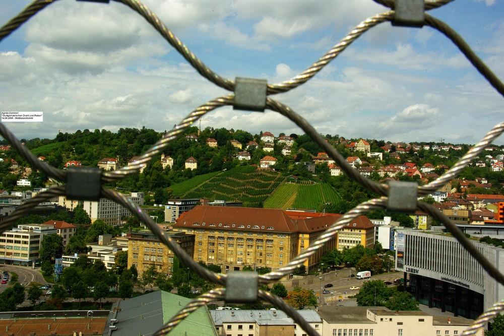Stuttgart zwischen Draht und Reben
