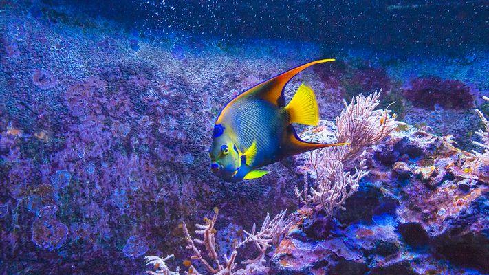 Stuttgarter Unterwasserwelt