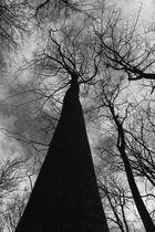 sub arbore considere