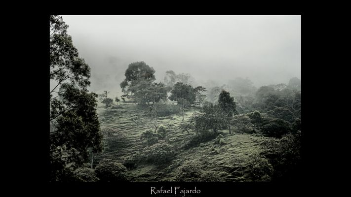 Sube la niebla