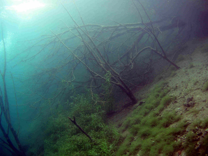 """""""Submersed Jungle"""""""