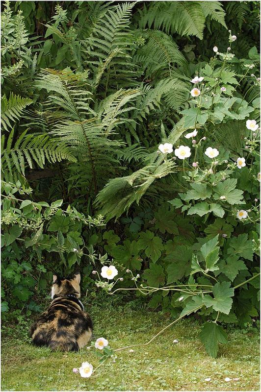 Suchbild: Lyra im Dschungel