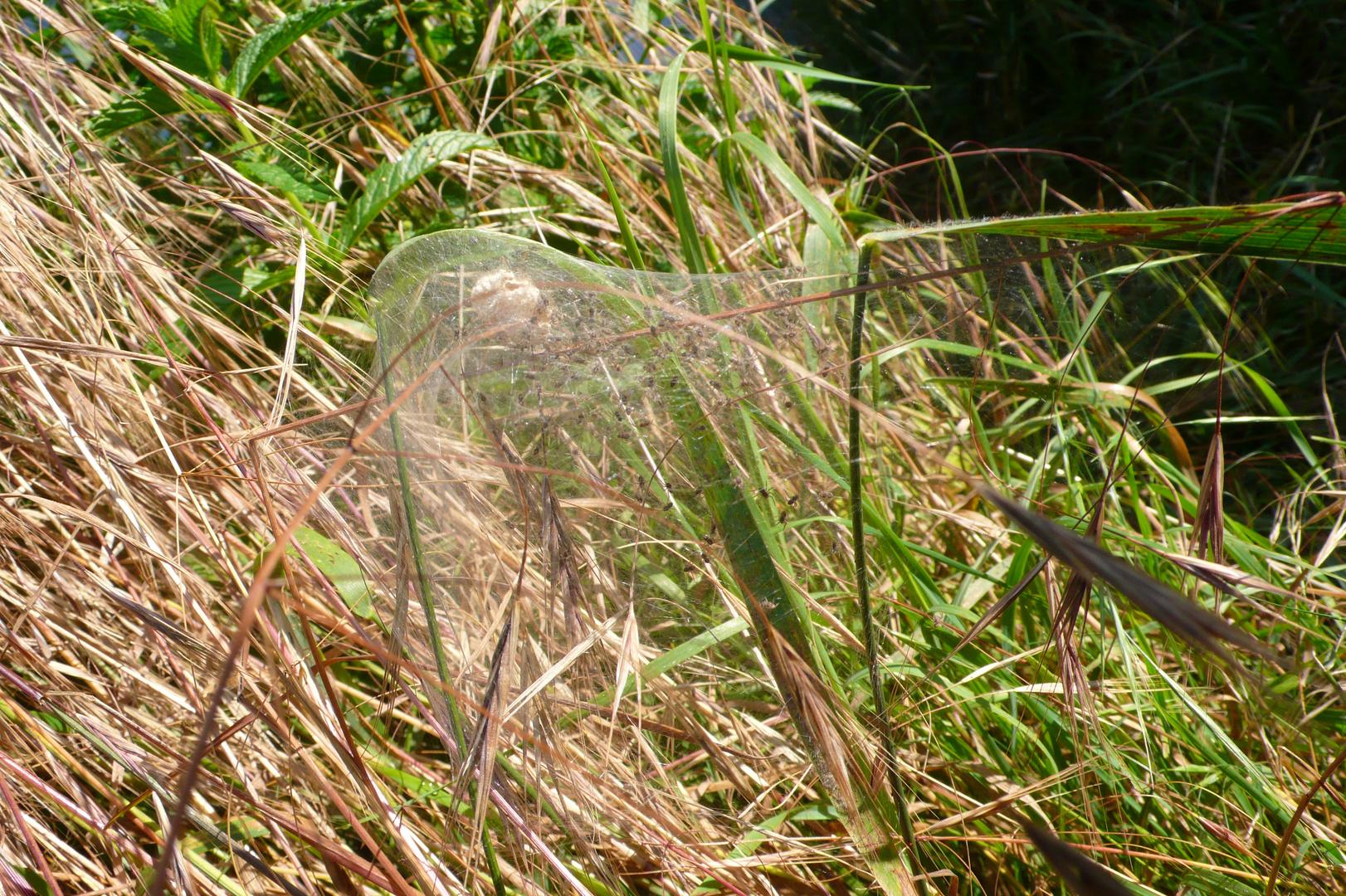 Suchbild: Spinnenkinder