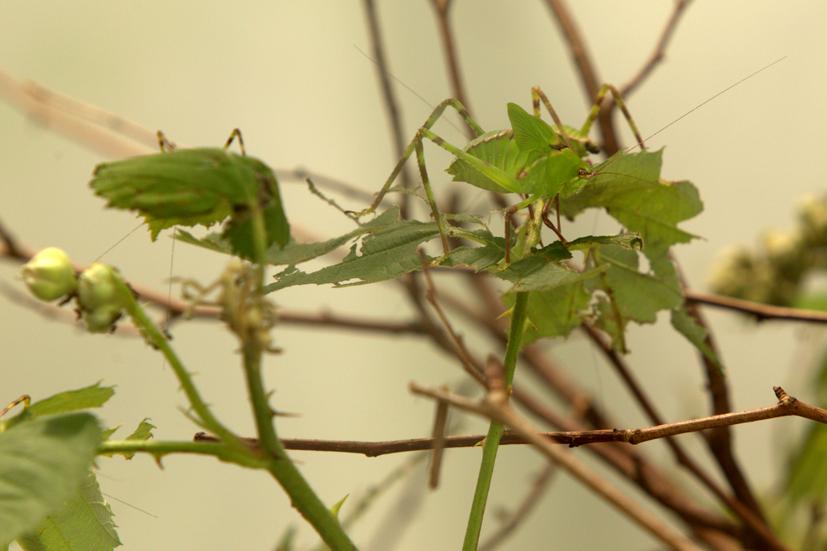 Suche die Insekten