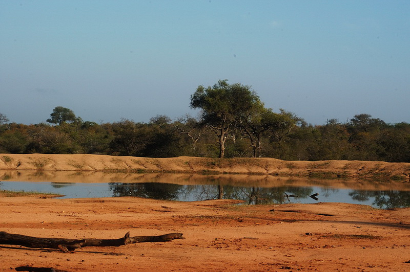Süd Afrika 2008 - Timbavati Private Game Reserve
