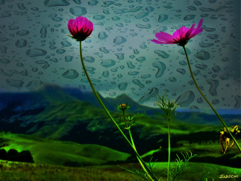 Süd Afrika - Drakensberg Blume