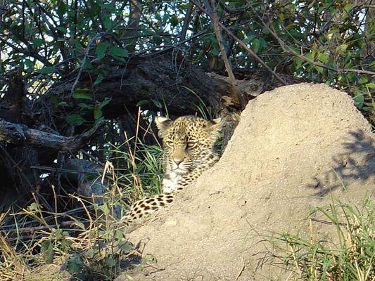 Südafrika - Leopärdli