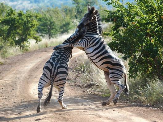 Südafrika - Pilanesberg