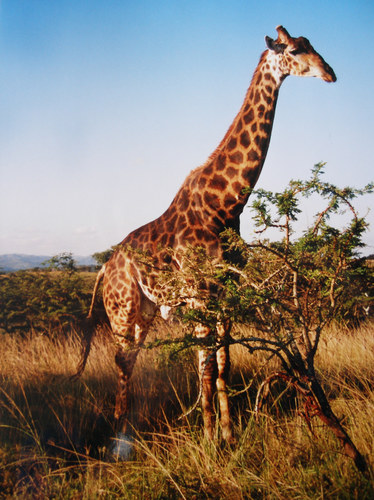 """ Südafrika Safari "" * 1 *"