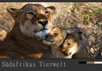Südafrikas Tierwelt – Die stolze Löwenmutter…..